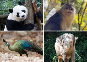 大象孔雀金丝猴们注意啦,昆明这场大会为你们而开